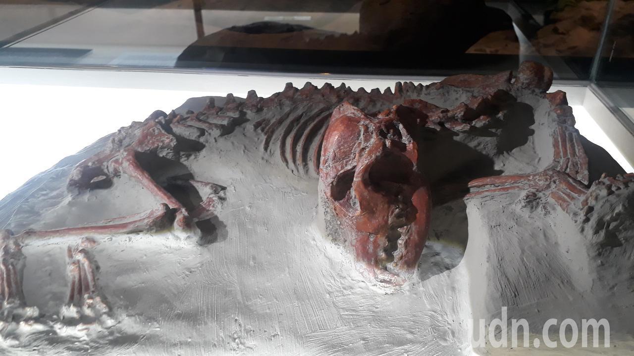 南科考古館展出「台灣第一狗」出土模型。記者周宗禎/攝影