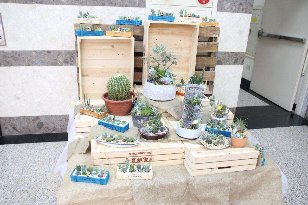 田尾鄉農會在一樓大廳布置多肉植物展示區。記者林敬家/攝影