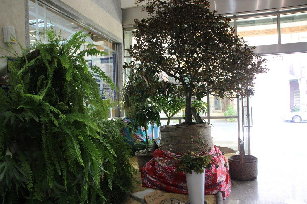 田尾鄉農會在一樓大廳造景布置,為周末的「多肉植物暨仙人掌評鑑活動」暖身。記者林敬...