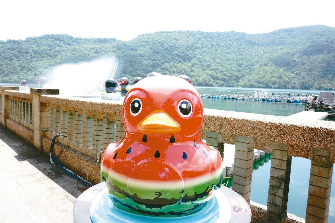 鯉魚潭畔的西瓜鴨。(圖/陳文琳攝影)