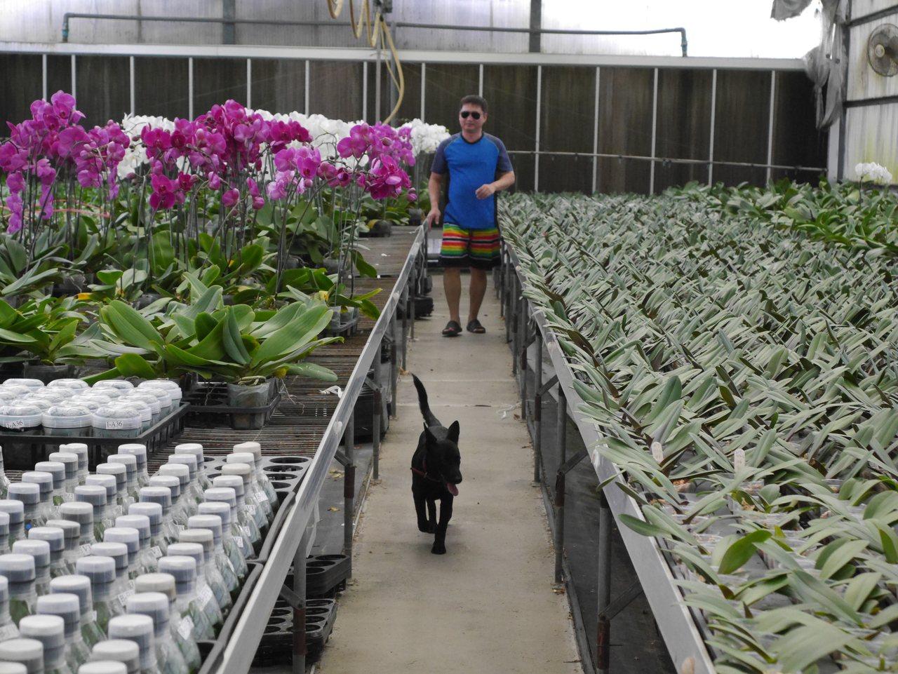 台南市動保處訓練流浪犬成為「護花使者」,守護蘭花園。圖/動保處提供