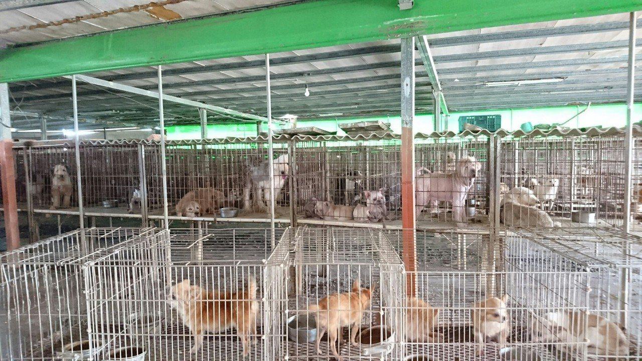 雲林縣查獲非法犬貓繁殖場,救出200多隻名種犬貓。圖/雲林縣政府提供
