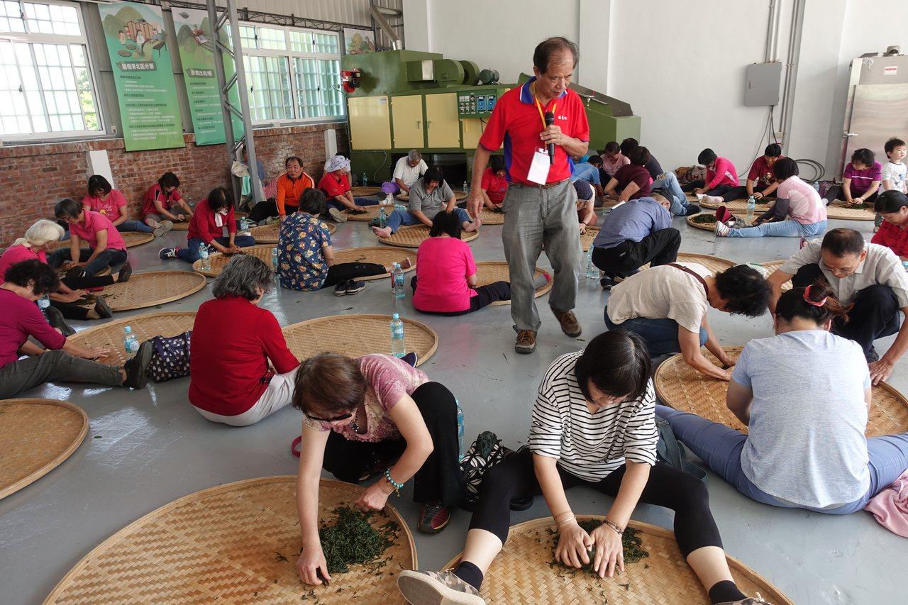 民眾參與茶農一日遊體驗課程,學習製茶相關知識,大家努力「揉茶」。記者劉星君/攝影