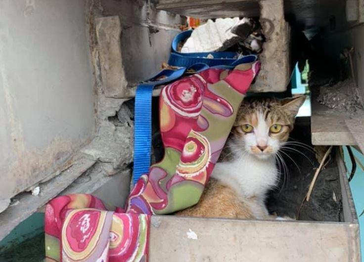 第一區養護工程處中和工務段段長游旻達,第一次在高架橋上伸縮縫遇見貓,他嚇一跳,貓...