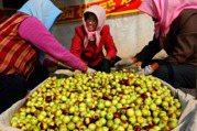 維生素C是橘子和柚子數十倍!營養師推秋冬這種水果