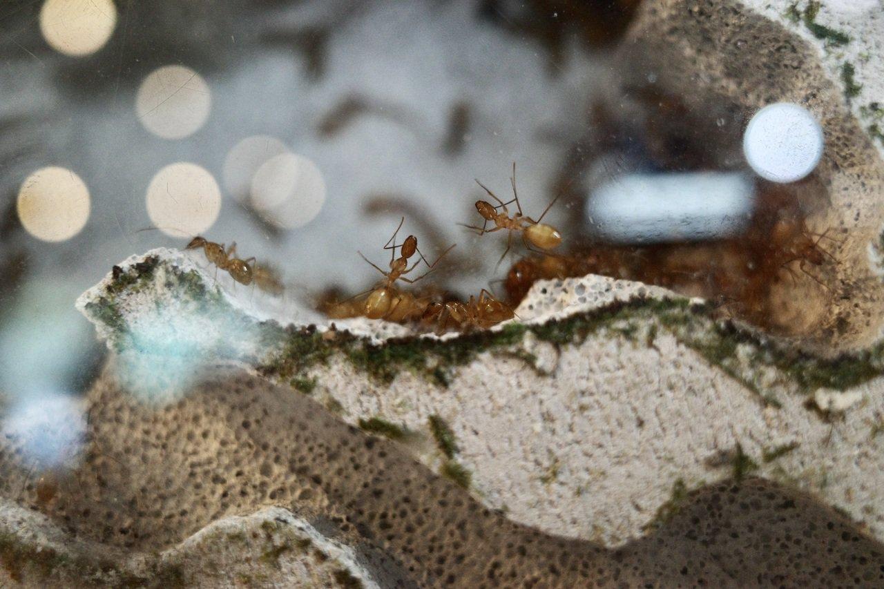 29歲王秉誠是全台第一個以螞蟻生態創業的青年,7年前成立「螞蟻帝國」,目前售價最...