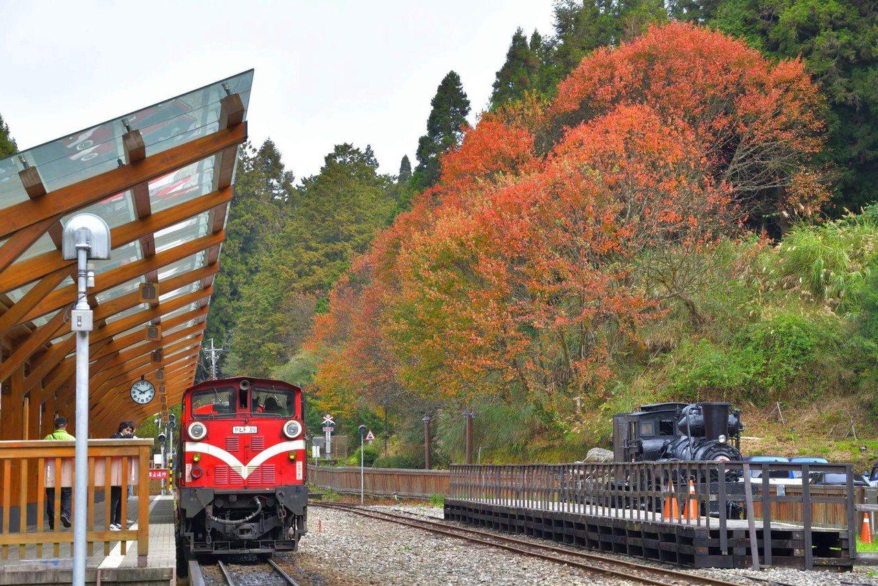 林務局阿里山林業鐵路及文化資產管理處將在12月推出「款行‧楓旅」主題列車,邀達人...