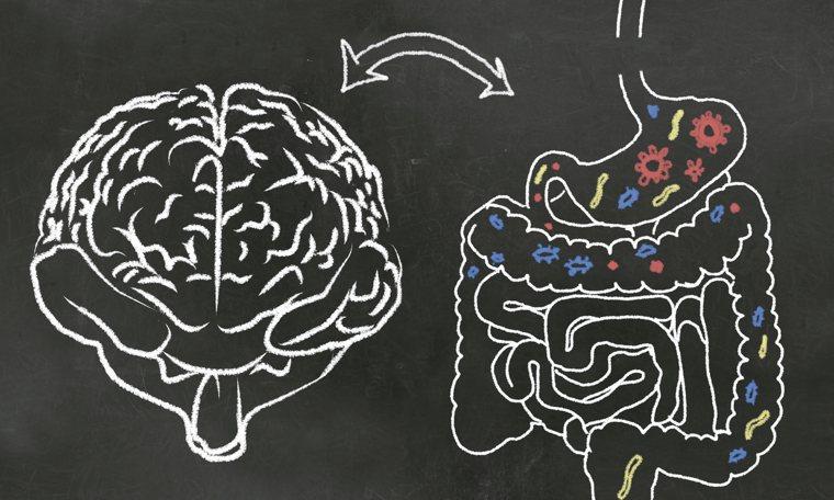 事實上,腸道除了是消化器官,幫助人體對食物的消化和營養吸收外,也是有情緒的「第二...
