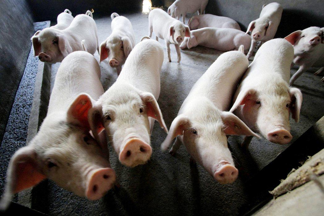 全球培根價格持續上漲要怪非洲豬瘟肆虐中國大陸。美聯社