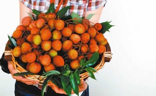 台灣首度要到澳洲種荔枝,將在周三簽署合作備忘錄。圖為台農七號品種。 本報資料照片
