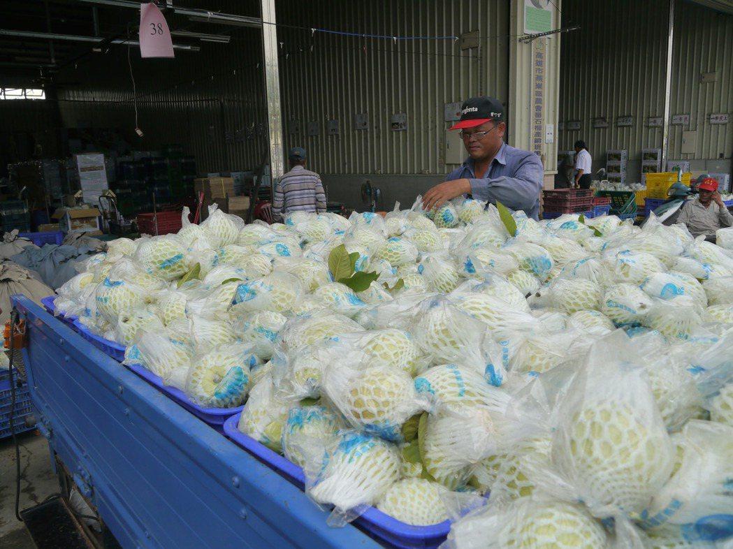 近日芭樂行情佳,市場拍賣價每公斤約50元,高雄燕巢農民忙著出貨至產銷班分級包裝。...