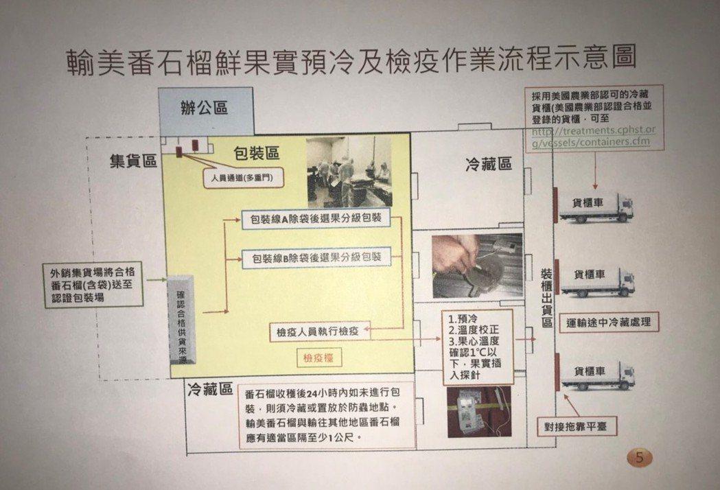 農委會防檢局提供的輸美番石榴果實預冷及檢疫作業流程示意圖。記者徐白櫻/翻攝