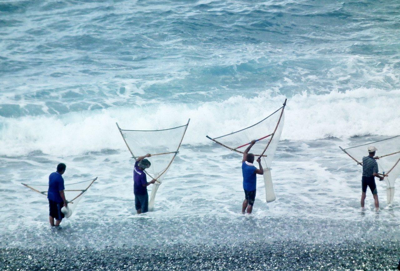 日本禿頭鯊魚苗被花東地區民眾視為珍饈,大雨週過後太麻里溪、金崙溪出海口常見民眾捕...