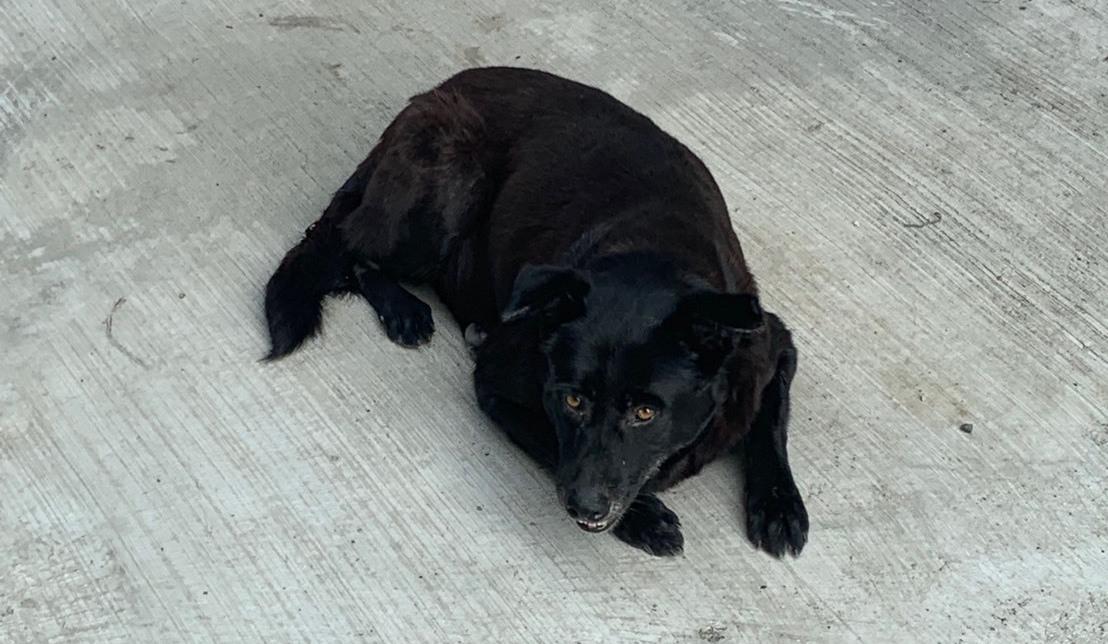 這隻黑狗,讓海巡署偵破私菸案。圖/海巡署提供