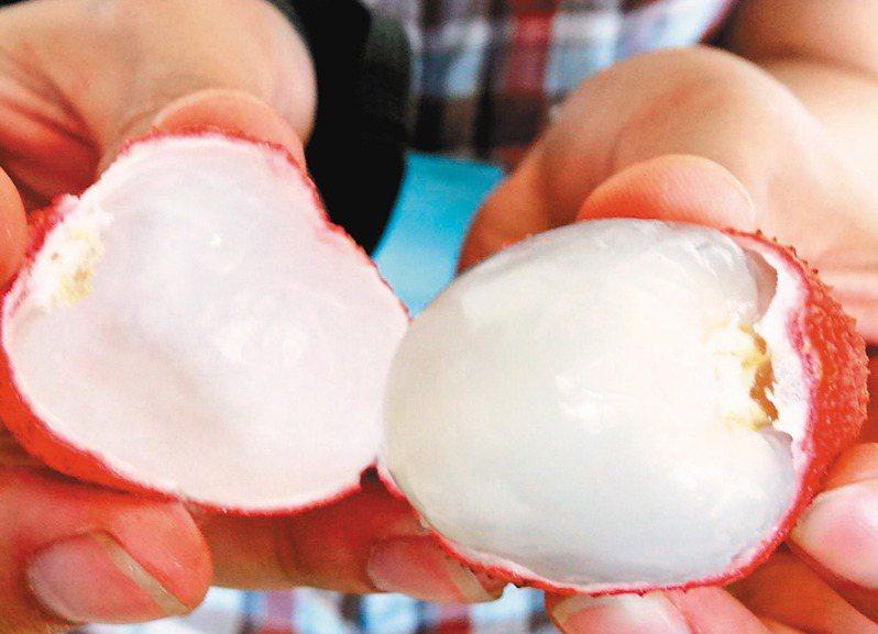 台灣首度要到澳洲種荔枝,將在周三簽署合作備忘錄。圖為台農七號品種。 圖/聯合報系資料照片
