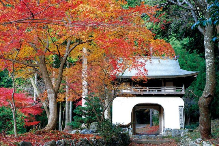 古知谷阿彌陀寺則是自江戶時期就饒富盛名的賞楓名所。 圖/京都市台灣推廣事務所提供