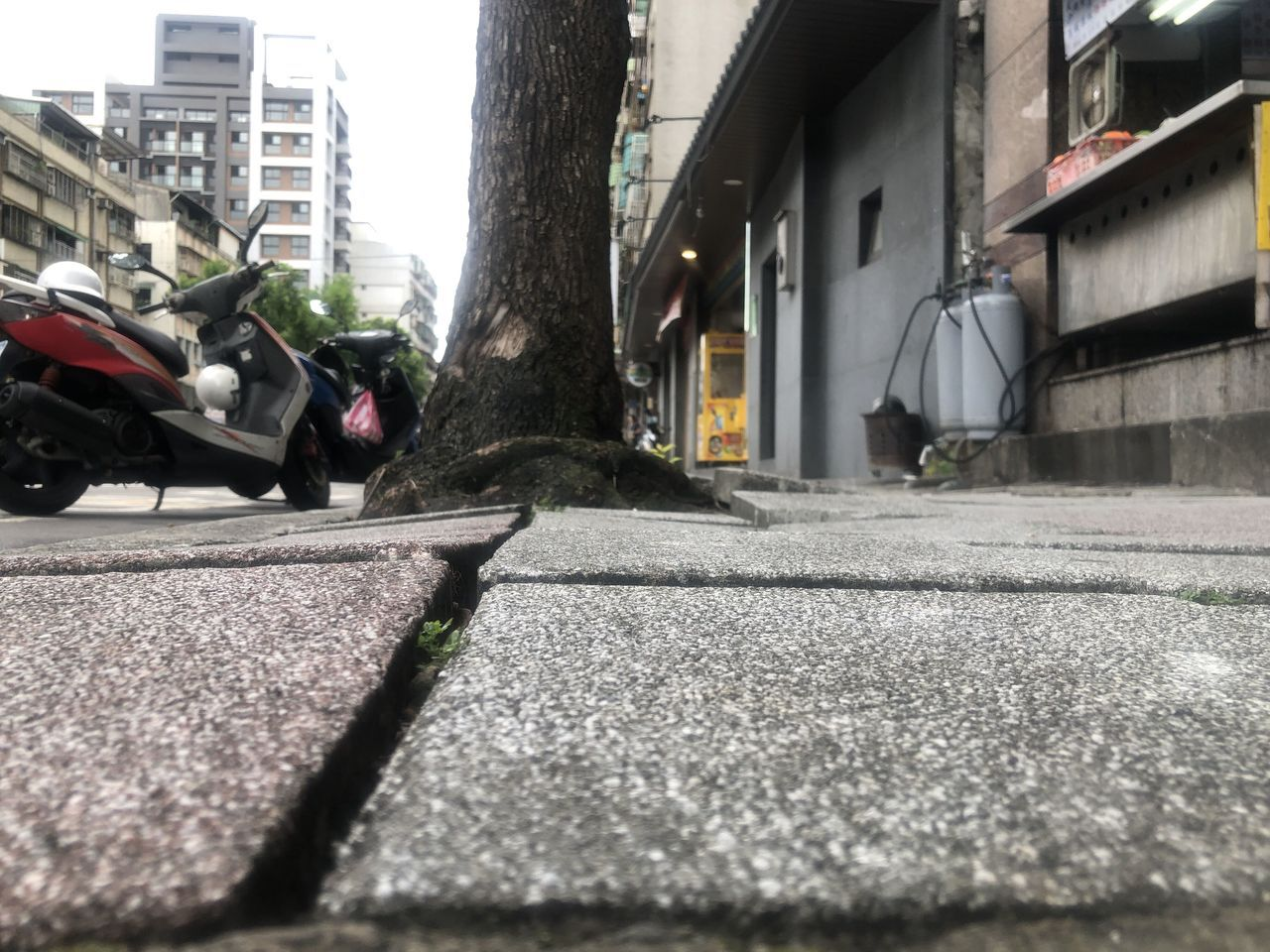 三重區龍濱路88號前人行道鋪設不平,還因路樹根使人行道磚隆起,影響民眾行走的安全...