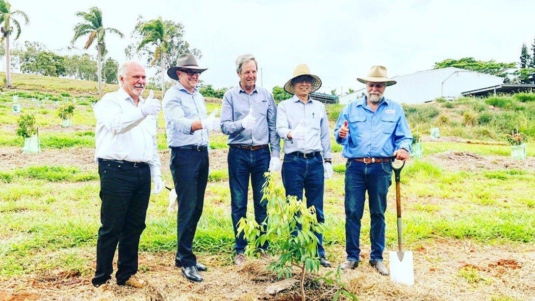 台灣荔枝澳洲試種。 圖/農委會提供