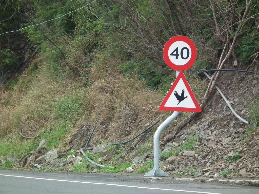 南迴公路台東段沿途設置「當心鳥禽」號誌牌,提醒用路人注意。 圖/聯合報系資料照片
