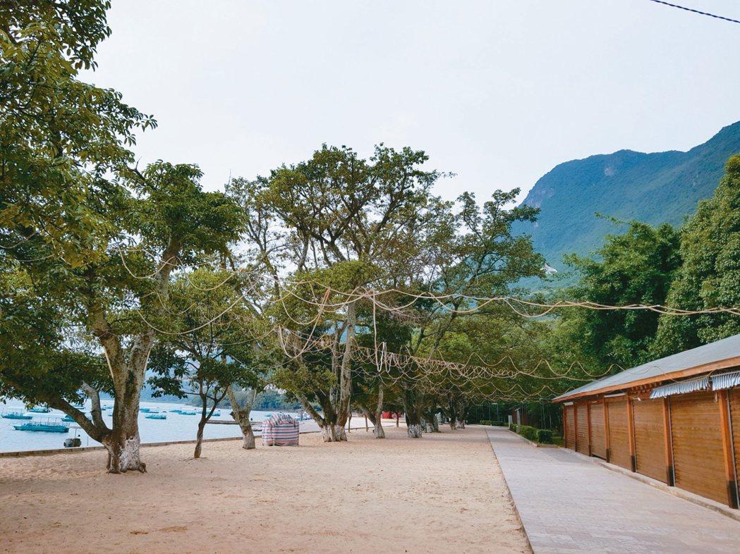榕樹灣的榕樹枝葉相連,挺秀繁茂。 圖/本報澄江傳真