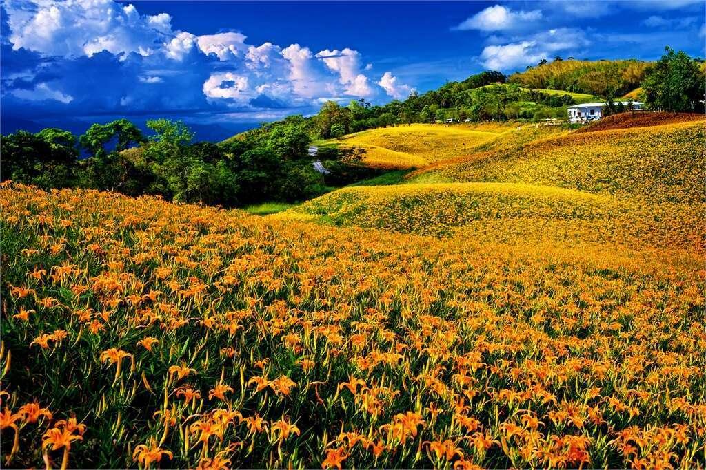 圖/取自花東縱谷國家風景區