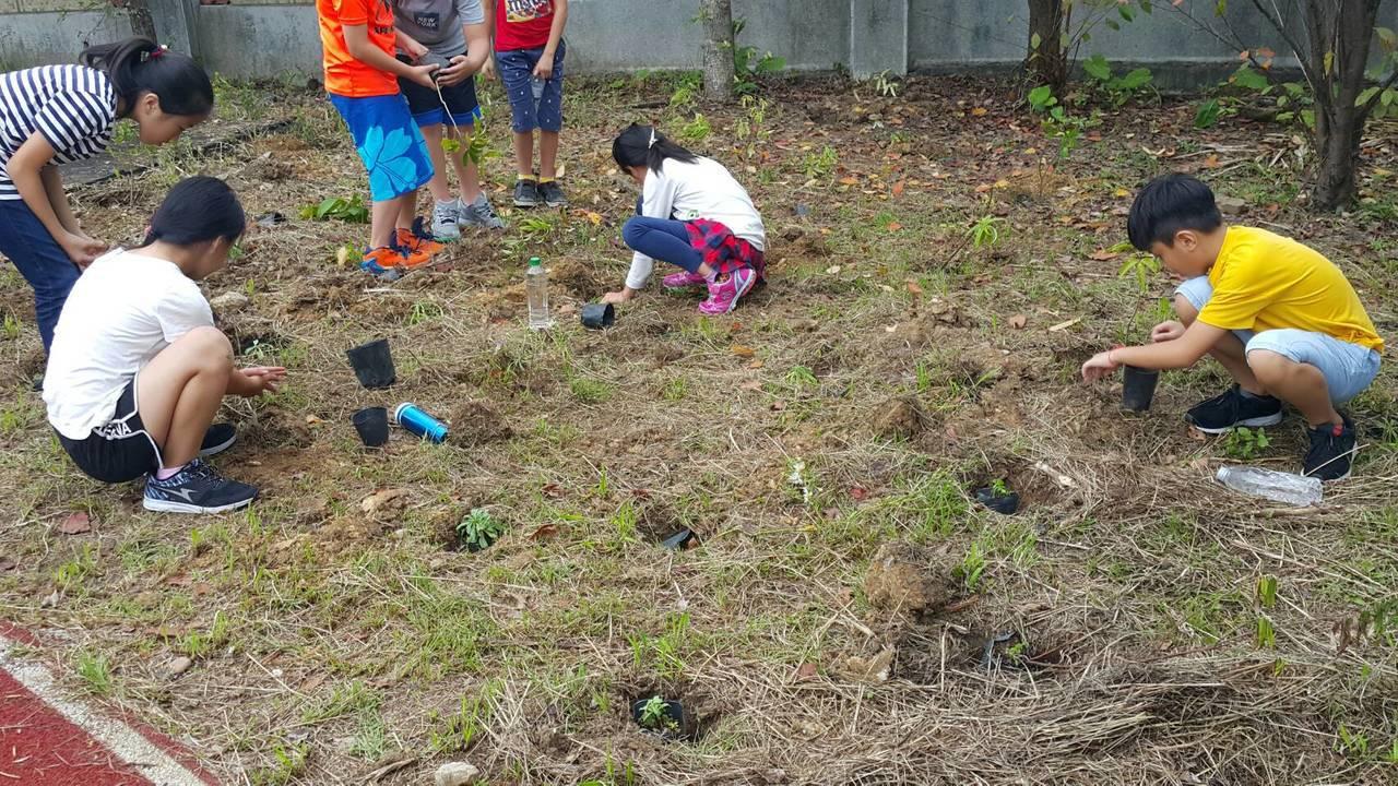 基隆市武崙國小學生等400多人,今天一起種下2000棵原生種小樹苗。記者游明煌/...