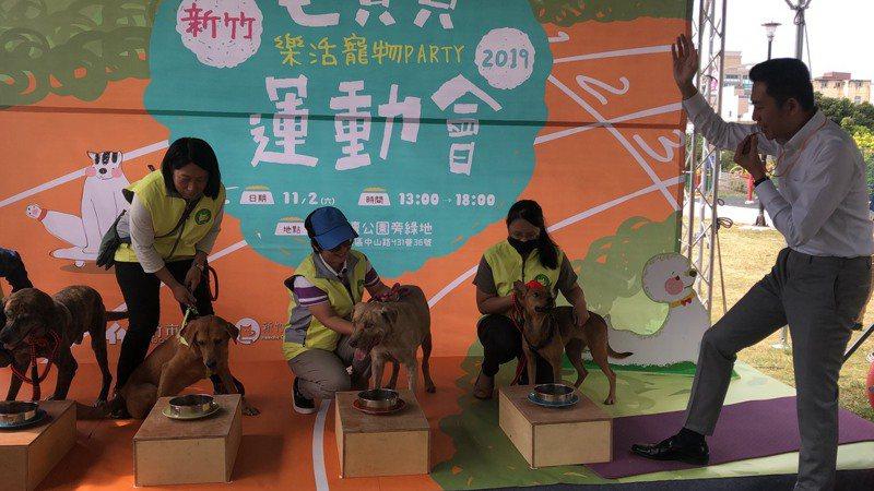 新竹市政府將於11月2日舉辦「2019毛寶貝運動會」,今天記者會由林智堅擔任趣味競賽「我願意餵你」裁判
