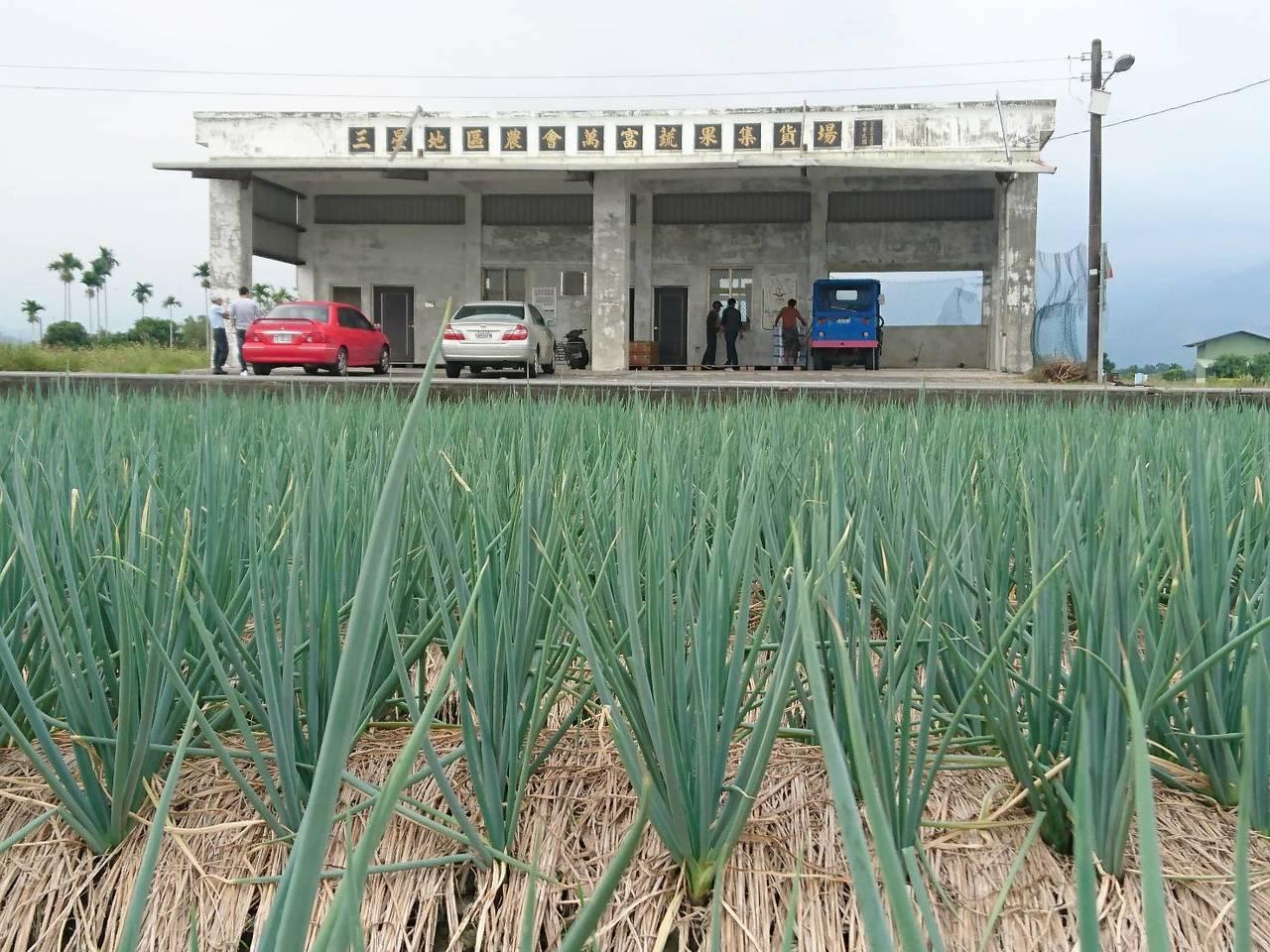 在三星地區農會萬富集貨場的37件裝好箱、共555公斤的三星蔥昨天遭竊,以今天每公...