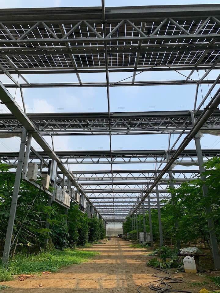 近看農電共生的作物,生成情形相當良好,破除外界的疑慮。  系統公會/提供