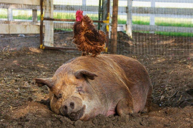 《我家有個開心農場》何時我們才能有個開心地球?