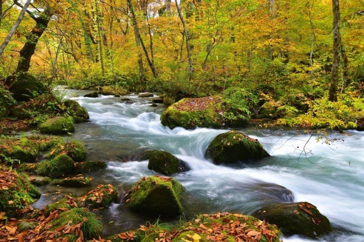 日本東北青森/奧入瀨溪流賞楓,號稱「天下第一美溪」