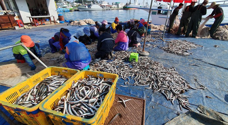 南韓Sokcho港,漁民正在處理漁獲。  歐新社