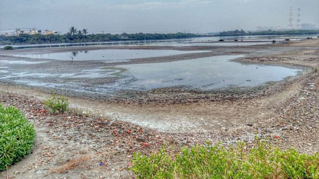 高雄永安濕地是黑琵的生態樂園,卻疑因水閘門故障失修,水位下降,遭致破壞。 圖/「...