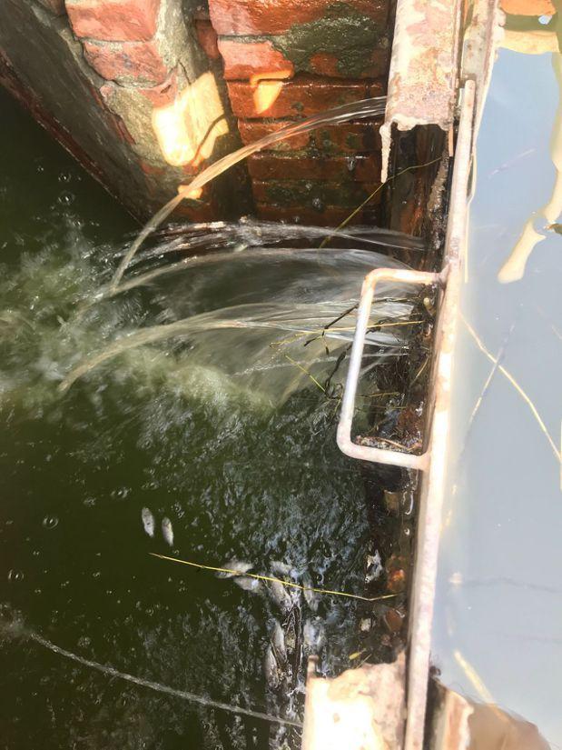 高雄永安濕地水位下降,疑因這處水閘門故障導致。 圖/吳泰祐提供