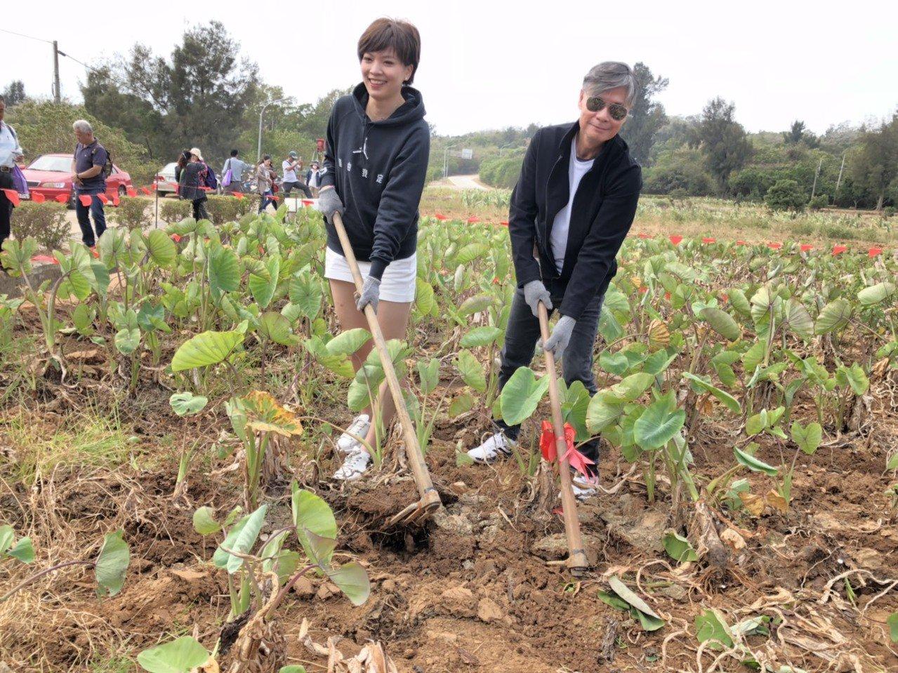 前國安會秘書長金溥聰和前主播、台北市議員鍾沛君也開心體驗挖芋頭,成為會場的焦點。...