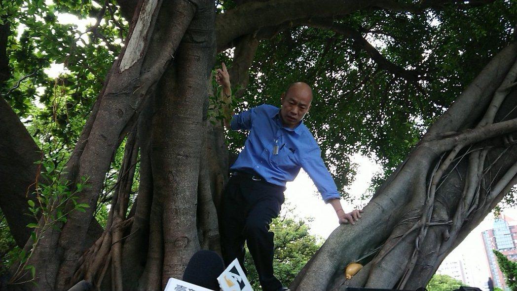高雄市長韓國瑜日前在前鎮區勞工公園視察登革熱防治情況,親自爬到3公尺高的樹上看樹...
