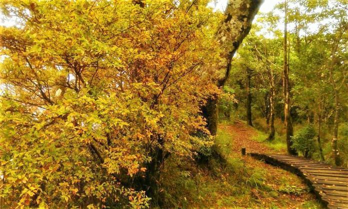 ▲秋日出遊必拍景點-宜蘭太平山山毛櫸。(圖/Tripbaa趣吧!亞洲自由行專家)
