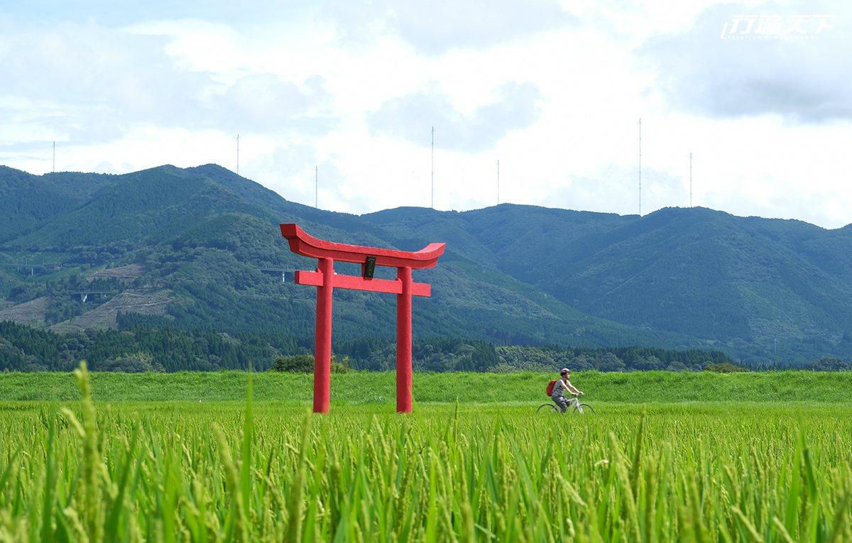 迎風騎乘穿越稻海裡的鳥居。