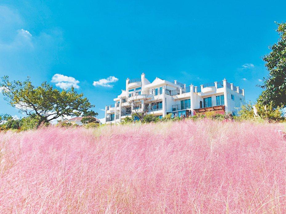 粉紅亂子草與Manor Blanc咖啡廳的浪漫風景。 記者張芳瑜/攝影