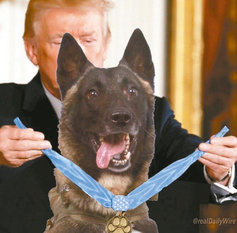 美國總統川普31日在推特公布頒發勳章給軍犬,被踢爆是合成照。 圖/取材自川普推特