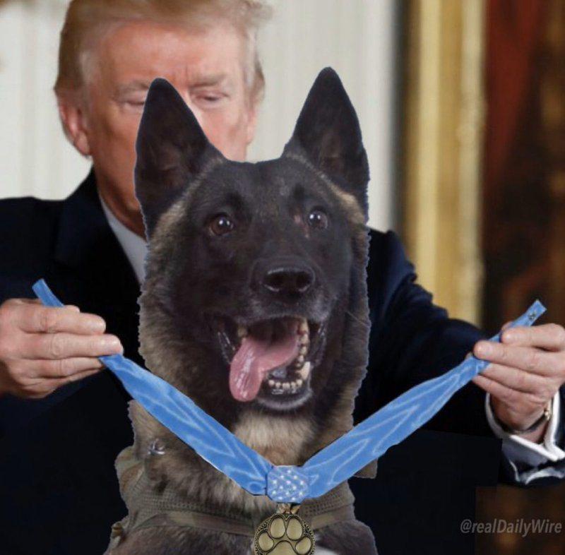美國總統川普31日在推特公布頒發勳章給軍犬的合成照。取自美國總統川普推特