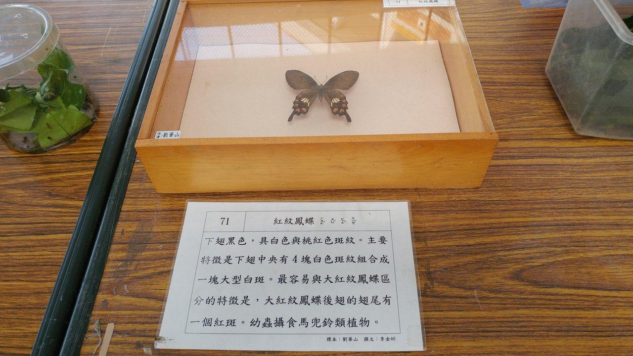 埔心鄉民劉華山夫妻提供許多昆蟲標本作為教材。圖/劉華山提供