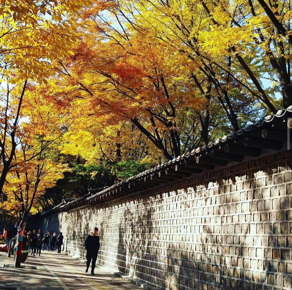 德壽宮石牆路為著名賞楓景點,卻是情侶禁忌之地。圖/取自IG: glenna930...