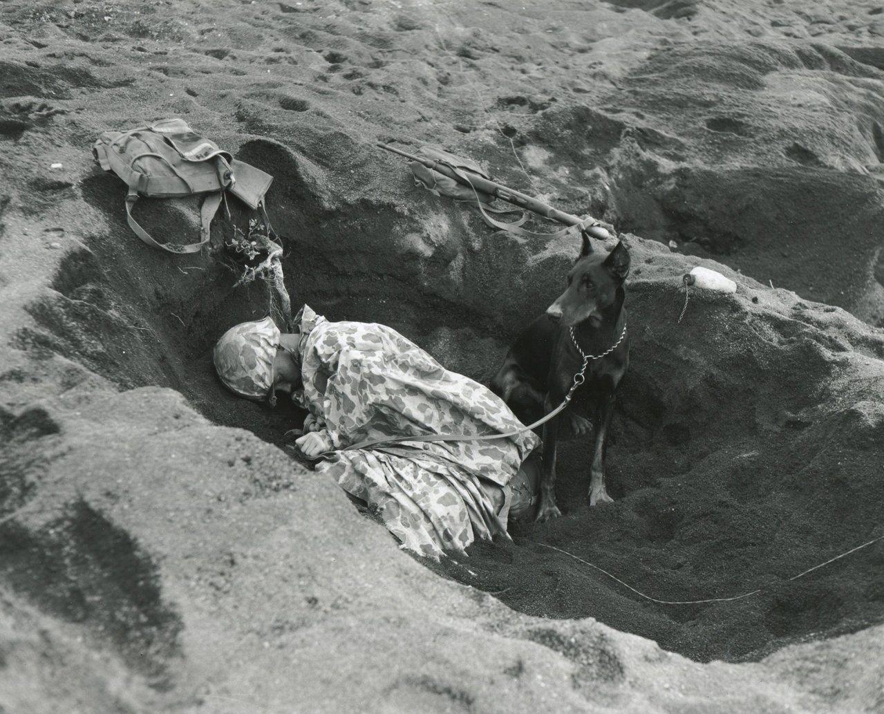 1945年二戰硫磺島戰役中,戰狗曾跟隨美軍陸戰隊出生入死。 (美聯社資料照片)