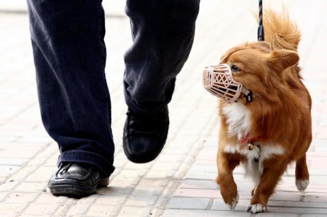 大陸許多地方對於飼養寵物犬的規定愈來愈嚴格,如今在山西太原,如果溜狗繩太長也會被...