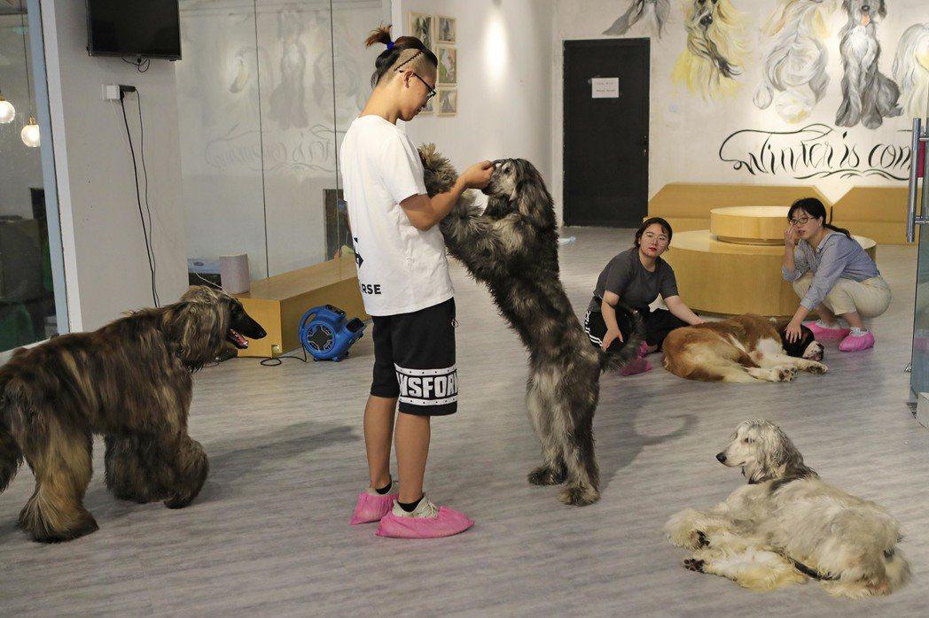 山東臨沂市近日發出禁養名錄的「烈性犬」通告,許多被列在名單上的大型犬和烈性犬的主...