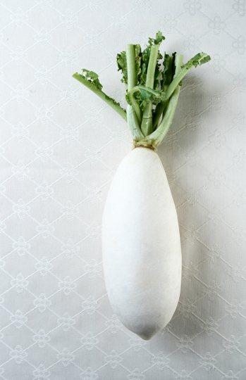 白蘿蔔又稱菜頭、萊菔,盛產期為秋冬時節,屬十字花科類。 圖/本報資料照片