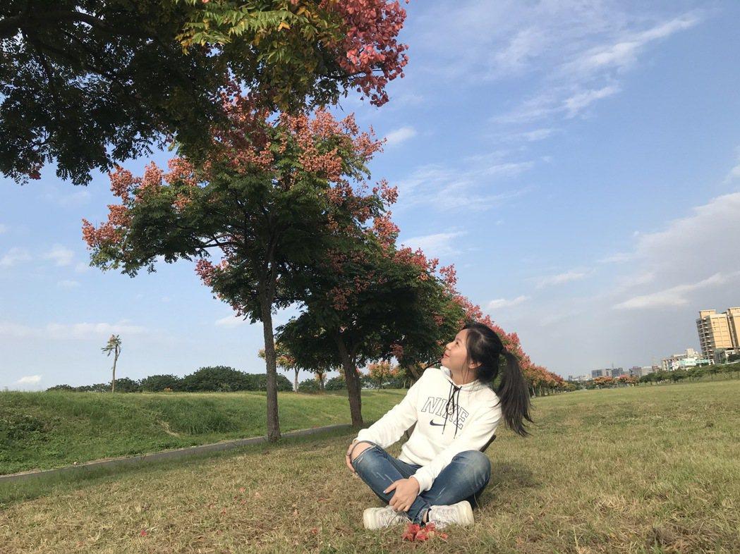 台灣欒樹屬因紅色氣囊狀的蒴果像一串串紅色燈籠,因此又被稱為「燈籠樹」。圖/新北市...