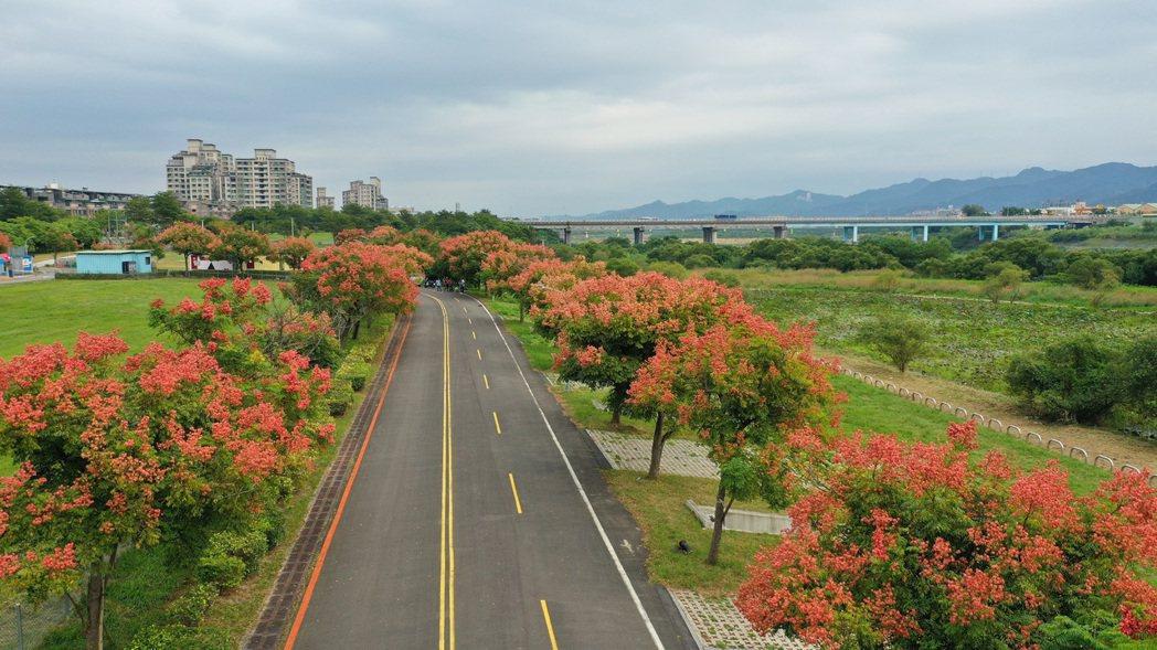 媽祖田河濱公園及柑園露營區沿線皆可欣賞到台灣欒樹美麗身影。圖/新北市高管處提供