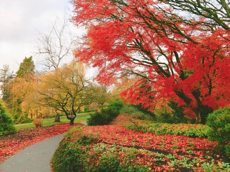 加拿大「伊莉莎白女皇公園」楓紅與綠葉交錯,為當地著名旅遊景點。記者徐力剛/攝影